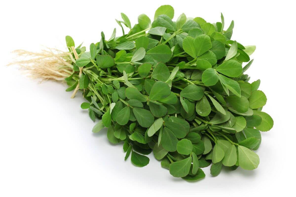 Fenugreek A Beneficial Herb, Spice And Amazing Medicine