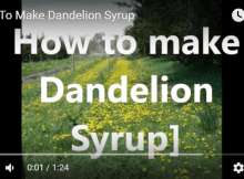 Dandelion Syrup Recipe And Application Examples