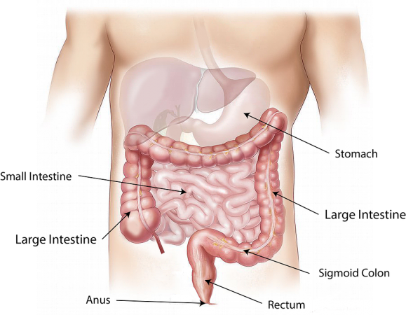 How To Keep Your Gut Healthy With Colon Hydrotherapy