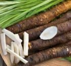 Salsify The Healthy Root Vegetables From The Earth