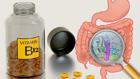 Vitamin B12 Myths - Can humans produce vitamin B12 in the gut?