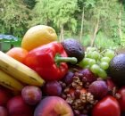 How Healthy Are Fruits And Vegetables - Do We Get Enough nutrients?